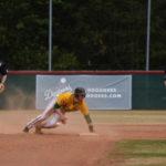 Heimsiege am Sonntag in 1. Baseball-Bundesliga / Hamburg wahrt Chancen